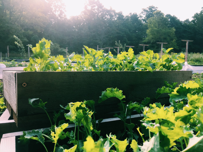 Organic garden in the sun