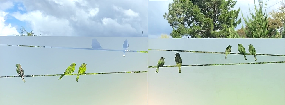 bird on a wire.png