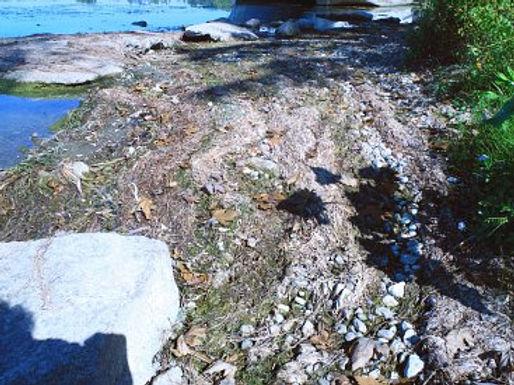 lakefront-closeup-w367.jpg