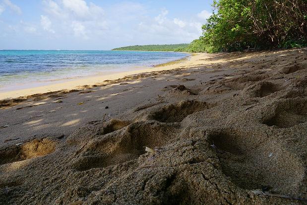 Reserva Natural Cabezas de San Juan, Ens