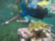 snorkeling lesson Pirate Snorkeling Shack Fajardo Puerto Rico snorkeling tour