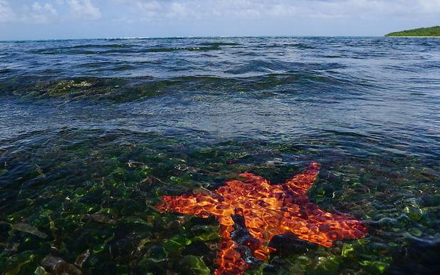 Star fish at Cabezas de San Juan Ensenad