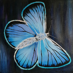 Butterfly paintings, 30x30 cm, acrylic on canvas, 2018.