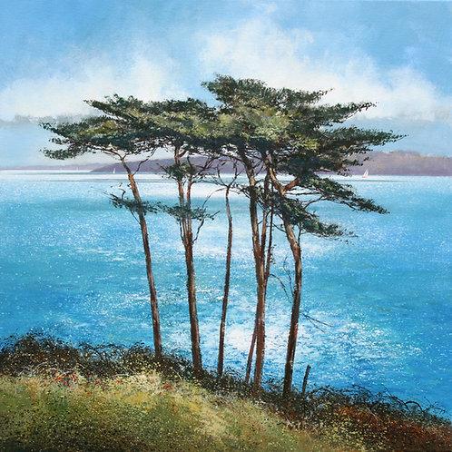 MS047 Sunlit Pines
