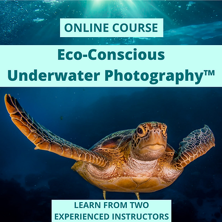 Eco-Conscious Underwater Photography IG.