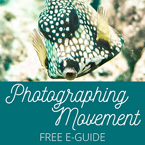 Photographing Movement IG Post.png