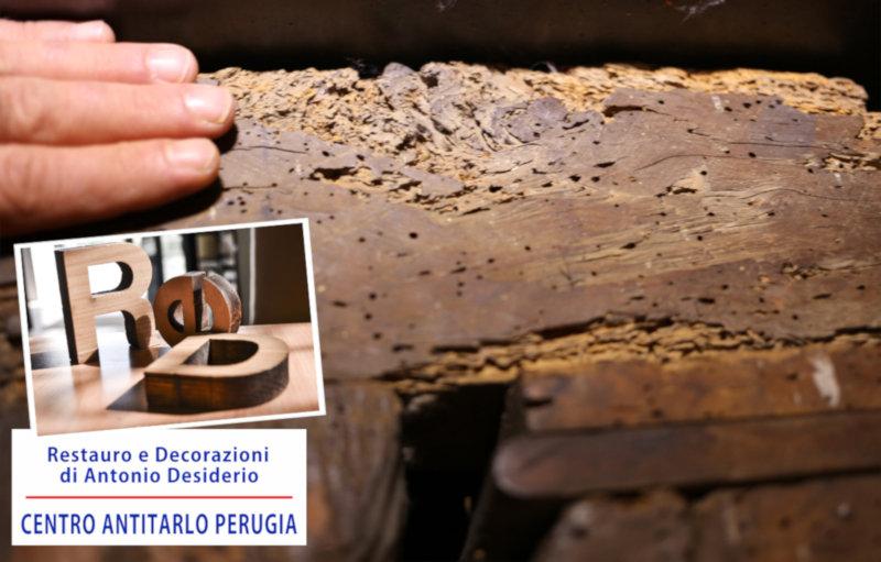 Centro Antitarlo Perugia.jpg