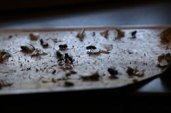 Cattura insetti