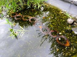 Nussbaumringe im Teich