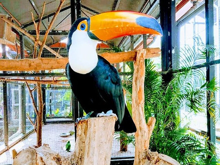 A day spent with vivid hypnotic birds never goes wrong | Essel World Bird Park | Mumbai