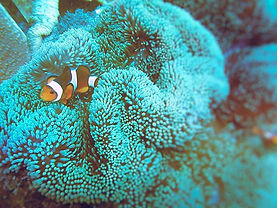 Finding Nemo.... He is in Bali, enjoying