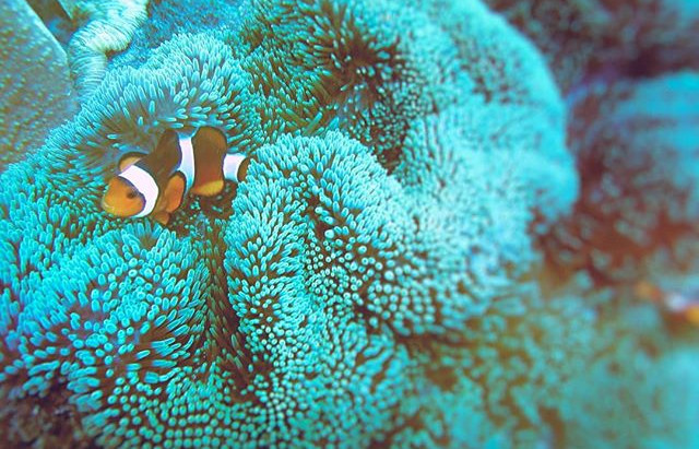 I met Nemo; the clownfish in Bali. I went to his home.