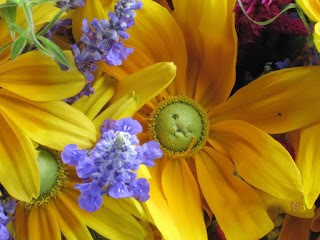 yellow dailsy and scabiosa