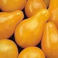 Fargo Yellow Pear tomatoes