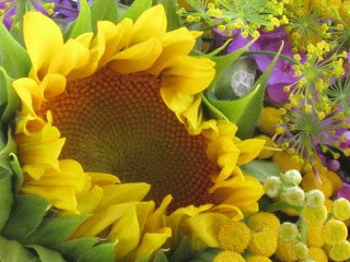 sunflower and phlox bouquet