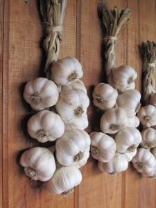 Sue's garlic braids