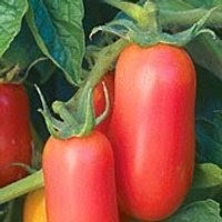 San Marzano paste tomato