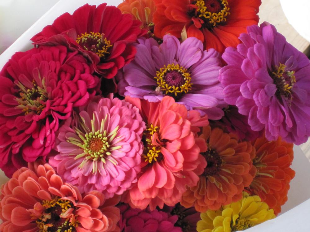 assorted zinnia bouquet