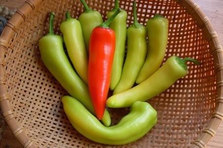Hungarian Hotwax pepper