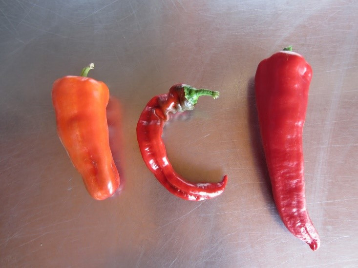 Cubanelle, Jimmy Nardello, and Carment sweet peppers