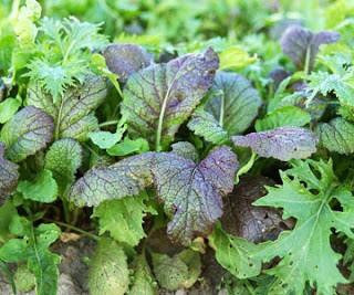 Asian greens - mustard, mizuna, tatsoi, collards, etc.