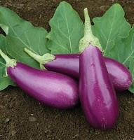 light purple eggplant