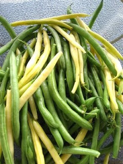 green and wax (yellow) beans