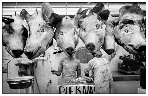 Pigheads