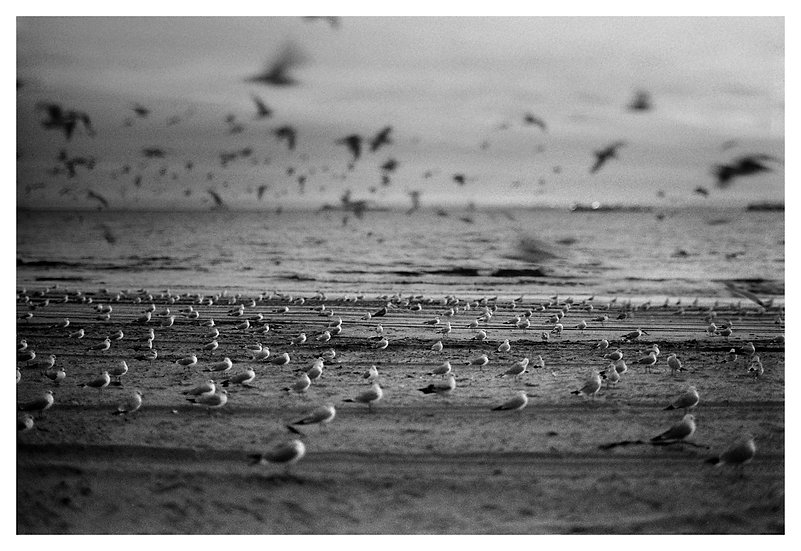 Seagulls (LIMITED EDITION 15)