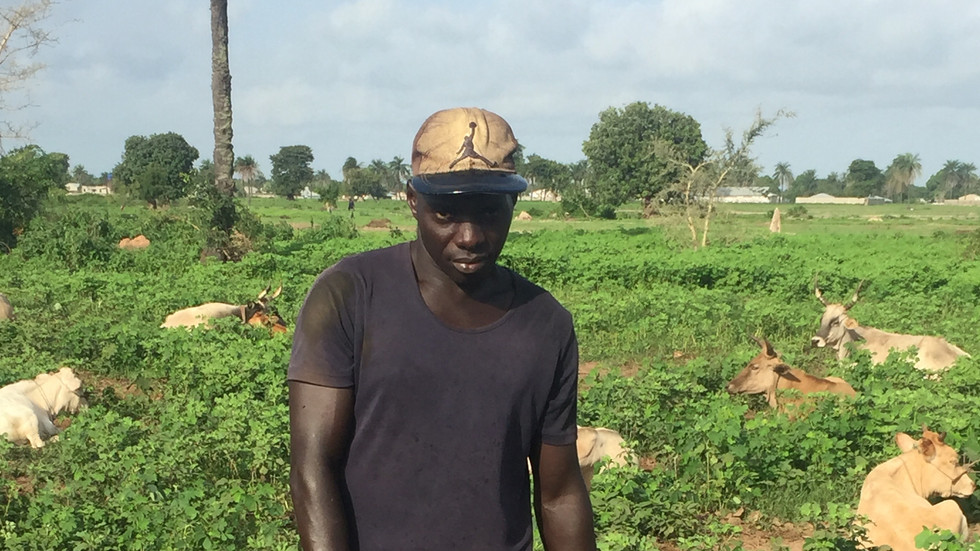 Herdsman posing with a young calf in a lush pasture in The Gambia during the rainy season in 2016. Photo by J. Washabaugh