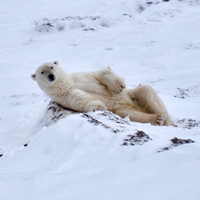 2018 Fall Arctic trip