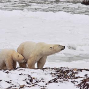 2017 Fall Arctic trip
