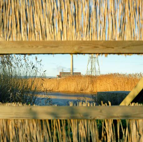 2. 'SECRET' BIRD WATCHING.jpg