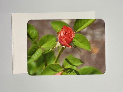 Rosebud Blank Greeting Card