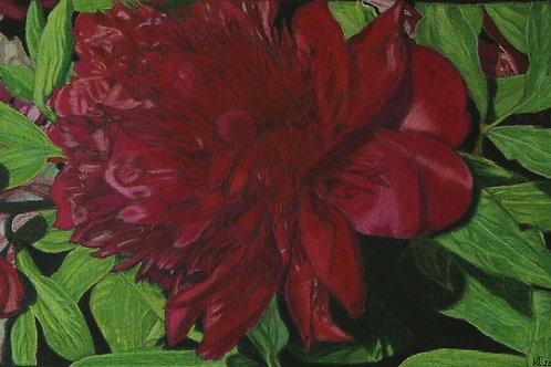 Utah Flower Original Colored Pencil