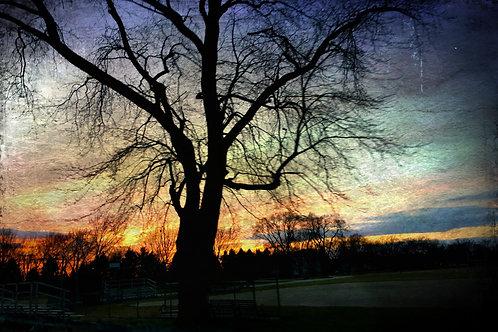 Sunset Tree - Edited Photo