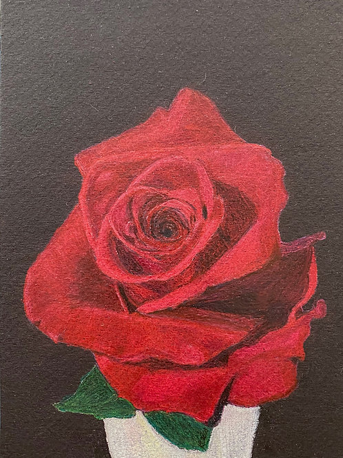 Rose - 7in x 5in Colored Pencil