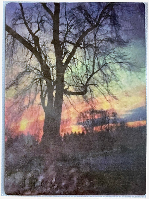 Tree at Sunset 4.5in x 5in Magnet