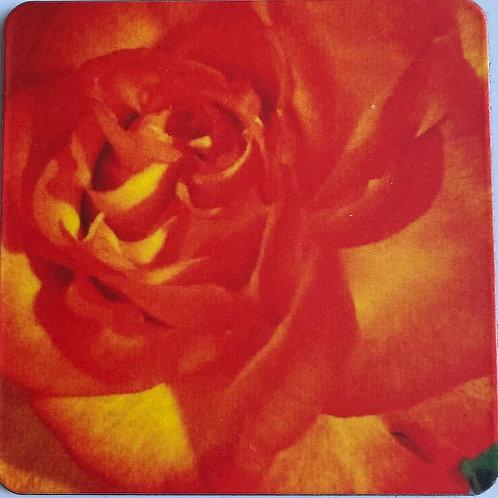 Orange Beauty 2 in x 2 in Square Magnet