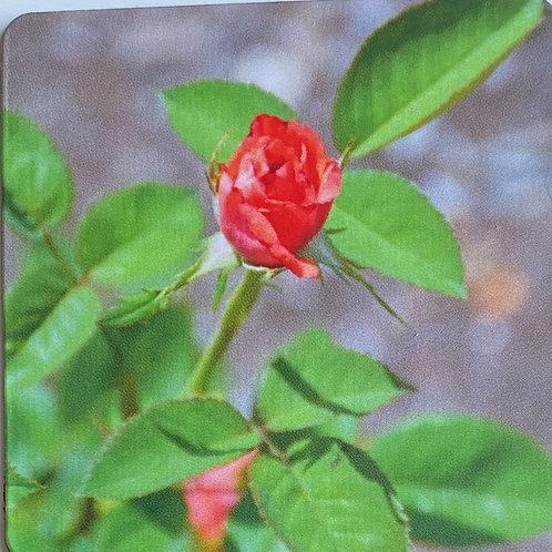 Rosebud 2 in x 2 in Square Magnet