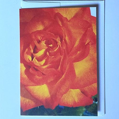 Orange Beauty Blank Greeting Card