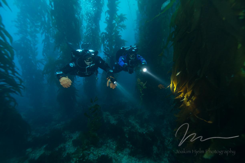 Catalina, Divers in Kelp