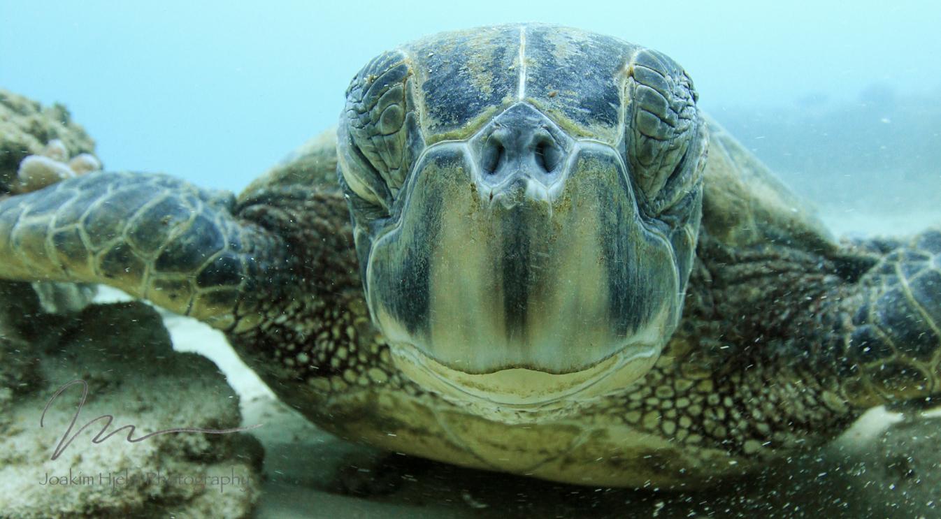 Nostril Closeup Turtle