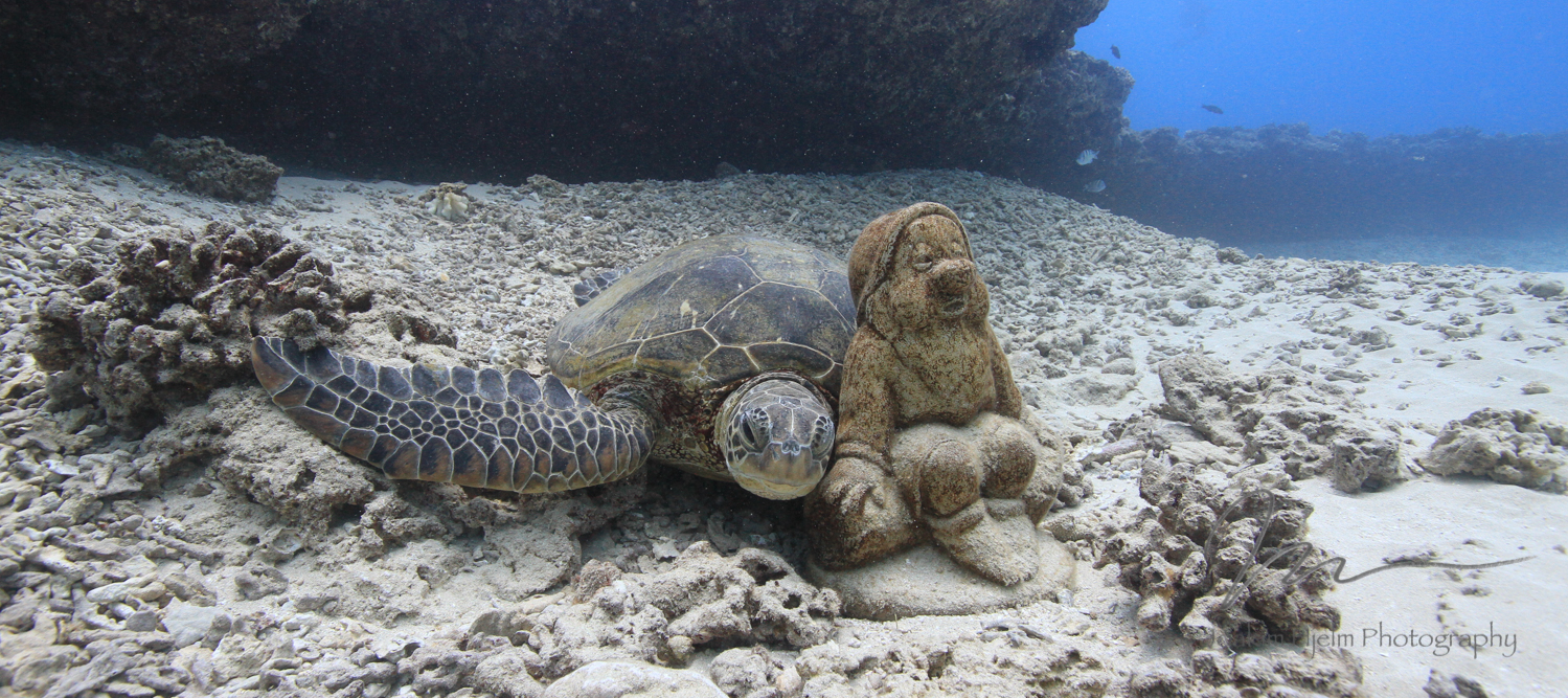 Turtle and Gnome
