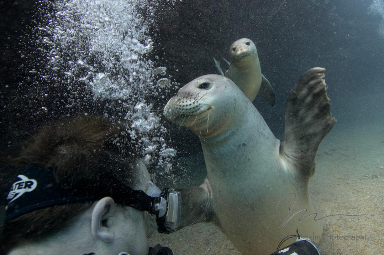 Monk Seal Hug
