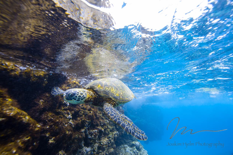 Green Sea Turtle Lounge