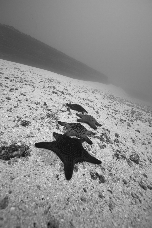 Seastars Vertical