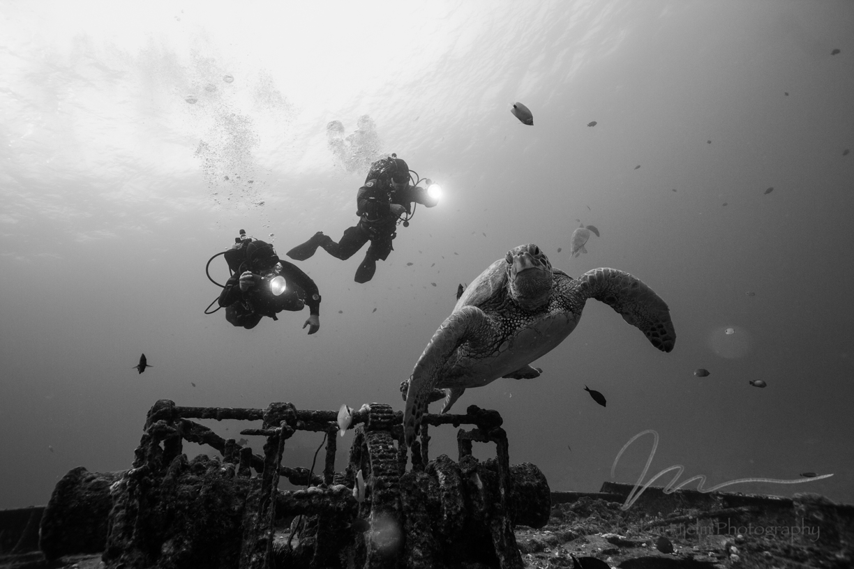 Turtle and Divers