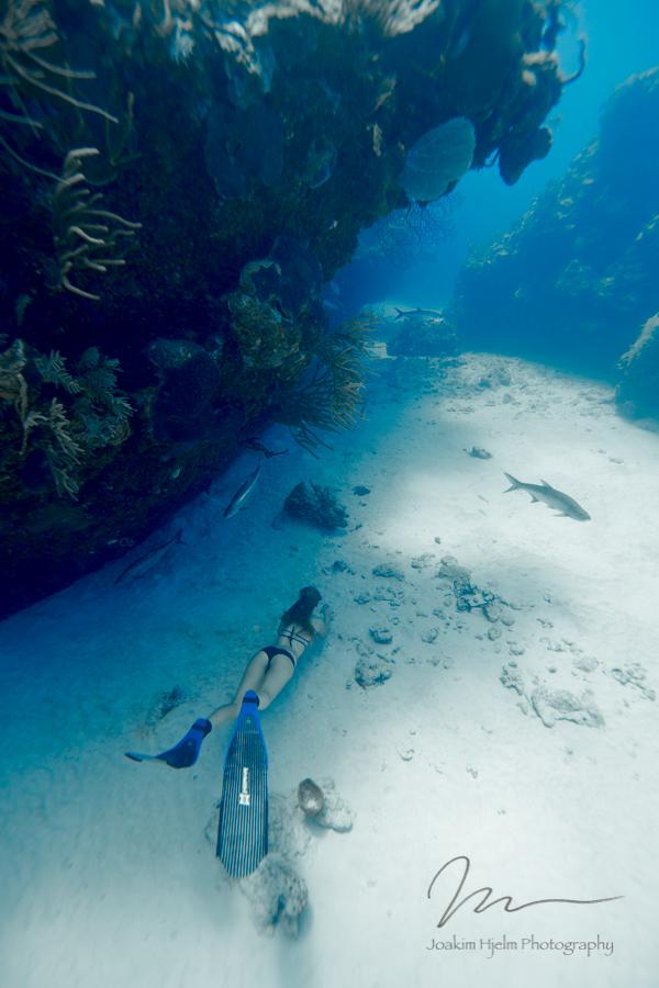 Tarpoon Cave, Shell cruizin.jpg