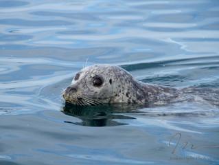Springtide Charters Whale Watch